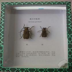 透明昆虫标本盒,求精教学(在线咨询),济源昆虫标本图片