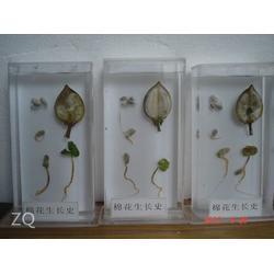 植物标本,求精教学,植物标本制作方法图片