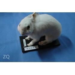 动物标本,仿真动物标本,求精教学(优质商家)图片