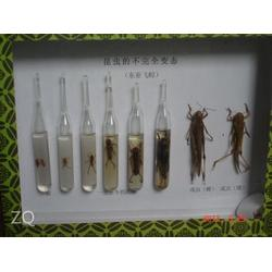 义务蝴蝶昆虫标本,怀化昆虫标本,求精教学图片