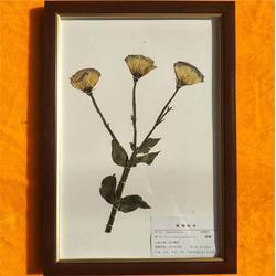标本_求精教学_植物标本图片
