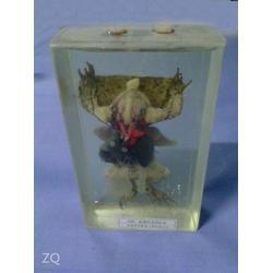昆虫动物标本,动物标本,求精教学(查看)图片