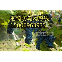 厂家特价促销樱桃防鸟网结实耐用全国包邮图片