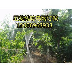 为什么天尔牌的尼龙葡萄防鸟网樱桃防鸟网好图片