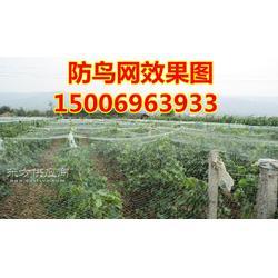 单丝尼龙白色防鸟网线粗0.32mm结实可以用5年厂家保证葡萄尼龙防鸟网图片