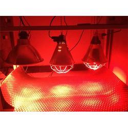 三渡照明(图),防水防爆保温灯,保温灯图片