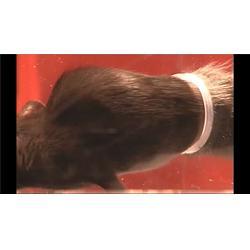 物流灭鼠怎么收费,瑞克灭鼠标准收费是多少,清远灭鼠图片