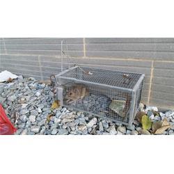 瑞克专业灭鼠公司(图)_商场灭鼠公司_天河区灭鼠公司图片