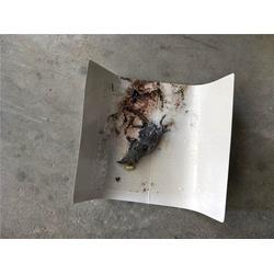 车间灭老鼠,海珠区灭老鼠,瑞克专业灭老鼠图片