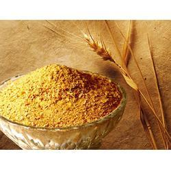 谷美食品(图)_河北小麦胚芽_小麦胚芽图片