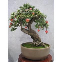 果树盆景石榴盆景图片