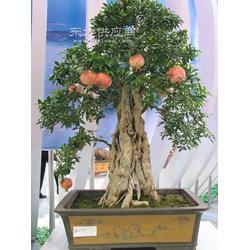 果树盆栽-供应厂家图片