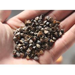 荞麦壳,荞麦,龙达家纺辅料(查看)图片