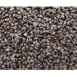 龙达家纺辅料、苦荞麦壳生产厂家、资阳苦荞麦壳图片