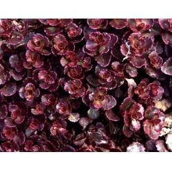 斌洋草花苗木(图),宿根花卉种植,黄石宿根花卉图片