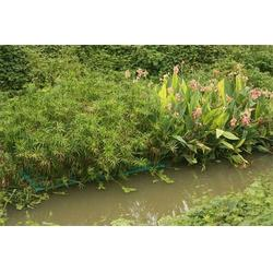 水生植物销售|斌洋草花苗木|双鸭山水生植物图片