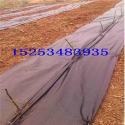 桂平防草布-德州保美塑业(优质商家)黑色编织防草布图片