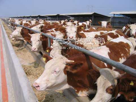 机械刮板清粪系统高科畜牧_牧场建设设计规划_养猪场养牛场猪舍牛舍的