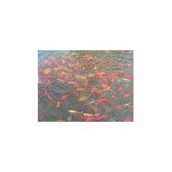 水产养殖消毒粉剂图片