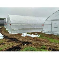 温室大棚、[广州温室]、单栋温室大棚图片