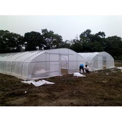 生态农业 温室大棚、芳诚园艺(在线咨询)、农业温室大棚图片
