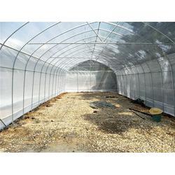 佛山育苗蔬菜大棚建造-芳诚温室图片