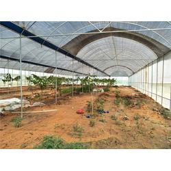 农业温室大棚、芳诚温室(在线咨询)、茂名温室大棚图片