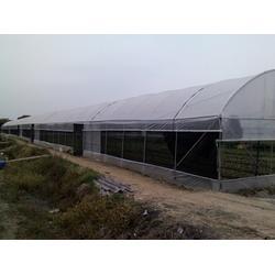 简易温室大棚、芳诚园艺、广州简易温室大棚图片