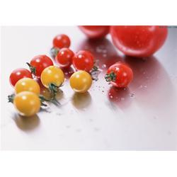 乔老师现代农业、露天西红柿种植技术、寿光西红柿种植技术图片