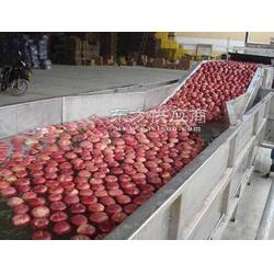 根茎类蔬菜清洗机 超声波清洗机能清洗水果吗图片