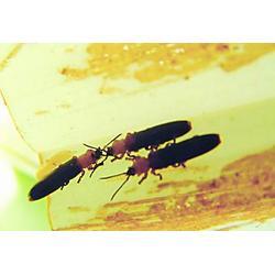 椰甲清防除椰心叶甲、广州绿顺园林(已认证)、椰甲清图片