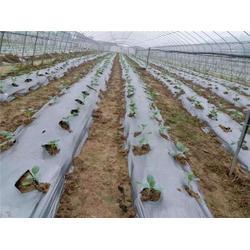 优质农膜土豆、优质农膜、硕泰,广东东莞优质农膜厂商图片