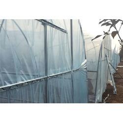 地膜锄草|硕泰、耐老化黑色地膜厂|地膜图片