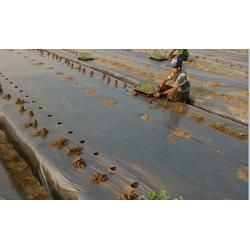 农膜 硕泰,广东农膜厂家直销 农膜辣椒图片
