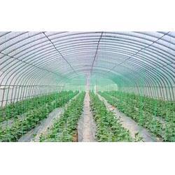 农用地膜、硕泰,广东东莞农用地膜厂、农用地膜图片