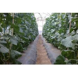 硕泰,广东东莞农用地膜厂(图),各类有色农用地膜,农用地膜图片