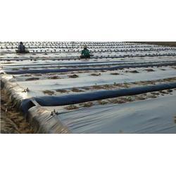 农膜西红柿|硕泰,广东农膜生产|农膜图片