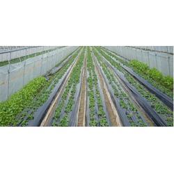 地膜|硕泰、广东地膜生产厂家哪家好|农用地膜的作用图片