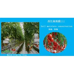地膜_地膜_硕泰,广西地膜生产厂商(查看)图片