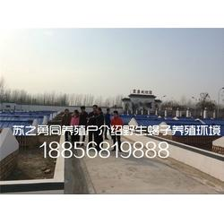 土元养殖、亳州霞康、镇江土元养殖图片