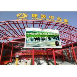 土元养殖,亳州霞康,杭州土元养殖图片