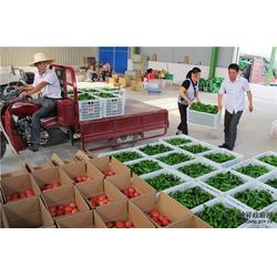 西安蔬菜配送公司、美食城配送、西安美食城配送单位图片