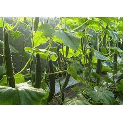 西安蔬菜配送哪家專業|蔬菜配送|西安蔬菜配送公司圖片