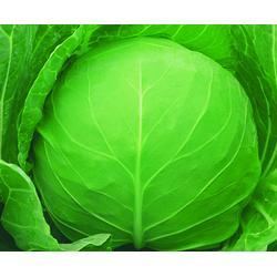 西安蔬菜配送公司-蔬菜配送-宝鸡蔬菜配送销售图片