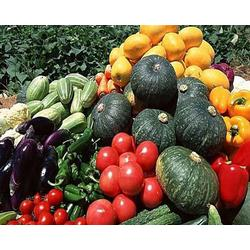 蔬菜配送-西安蔬菜配送公司(优质商家)周至蔬菜配送服务图片