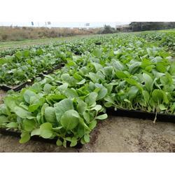 经开区鲜蔬配送-袋鼠农产品销售-鲜蔬配送图片
