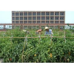 袋鼠农产品销售,西安蔬菜配送单位,蔬菜配送图片