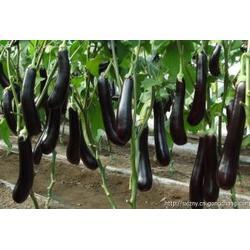 西安蔬菜配送公司、西安蔬菜配送、西安蔬菜配送图片