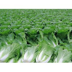 草滩蔬菜配送电话、西安蔬菜配送公司(在线咨询)、蔬菜图片