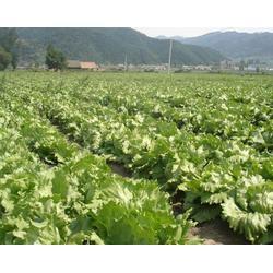 户县蔬菜配送费用、蔬菜配送、西安蔬菜配送公司(查看)图片